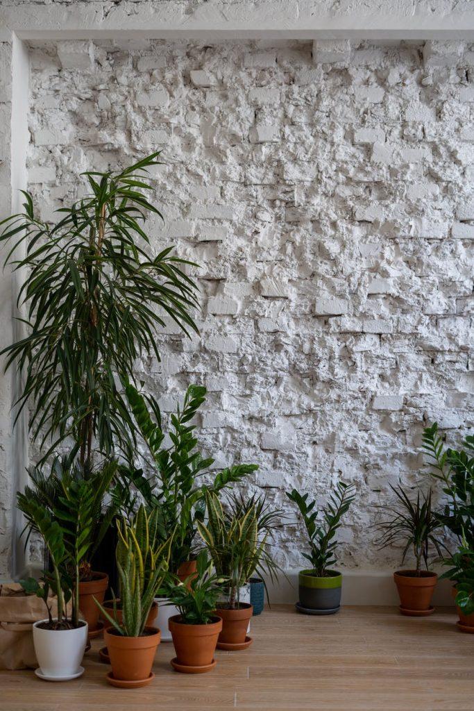 Подготовка растений к переезду